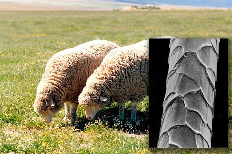 """Imatge conferència: """"Noves possibilitats de la llana per a un disseny sostenible"""""""