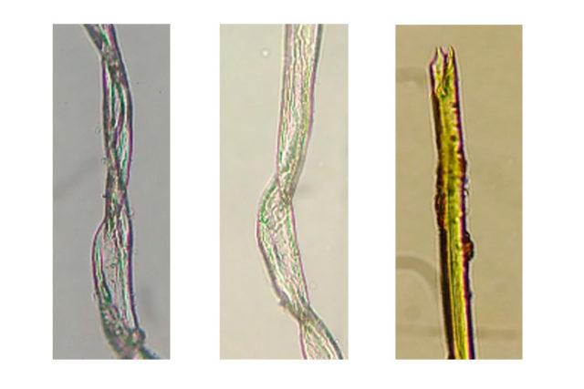 Imatge fibres.